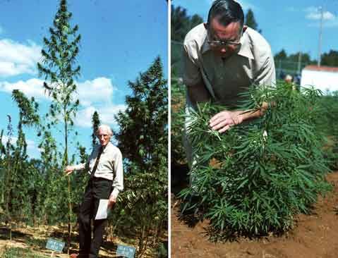 Hemp: A New Crop with New Uses for North America